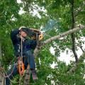 Спилим деревья любой сложности сухие аварийные в трудно доступных местах, с гарантией от повреждений